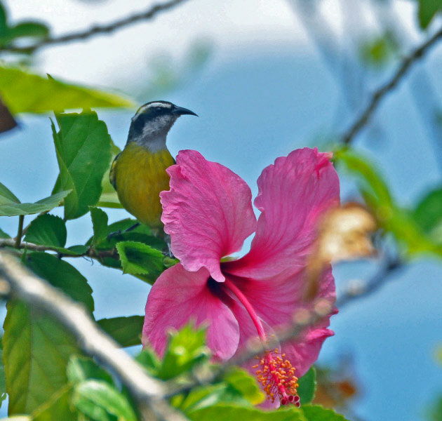 Ots las cruces san vito bird club for Jardin wilson