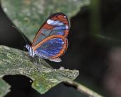 """Glasswing"", Greta ono. Photo by Julie Girard."