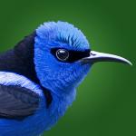 birdeye-costarica-app