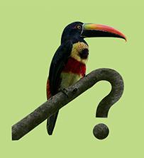 costaricabirds-app