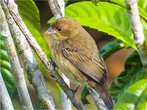 Quiz Bird! Photo by Jo Davidson