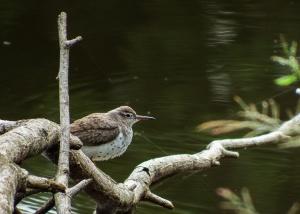 Mystery Bird Photo by Gail Hull