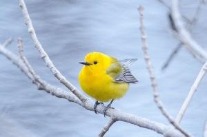 Quiz Bird #6