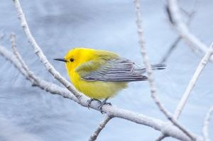 Quiz Bird #6!