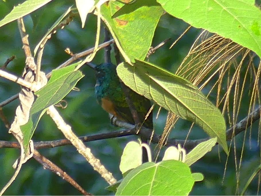 Bird - meaning of bird dictionary