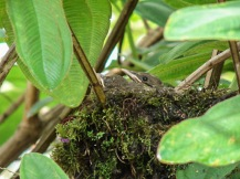 SVBC-alisonolivieri-CC Robins nest-R