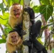 SVBC-jeffworman-0078- WF Monkeys-R
