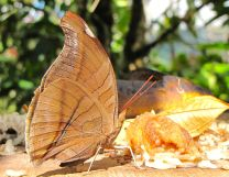 SVBC-helenle-butterfly1-jpg